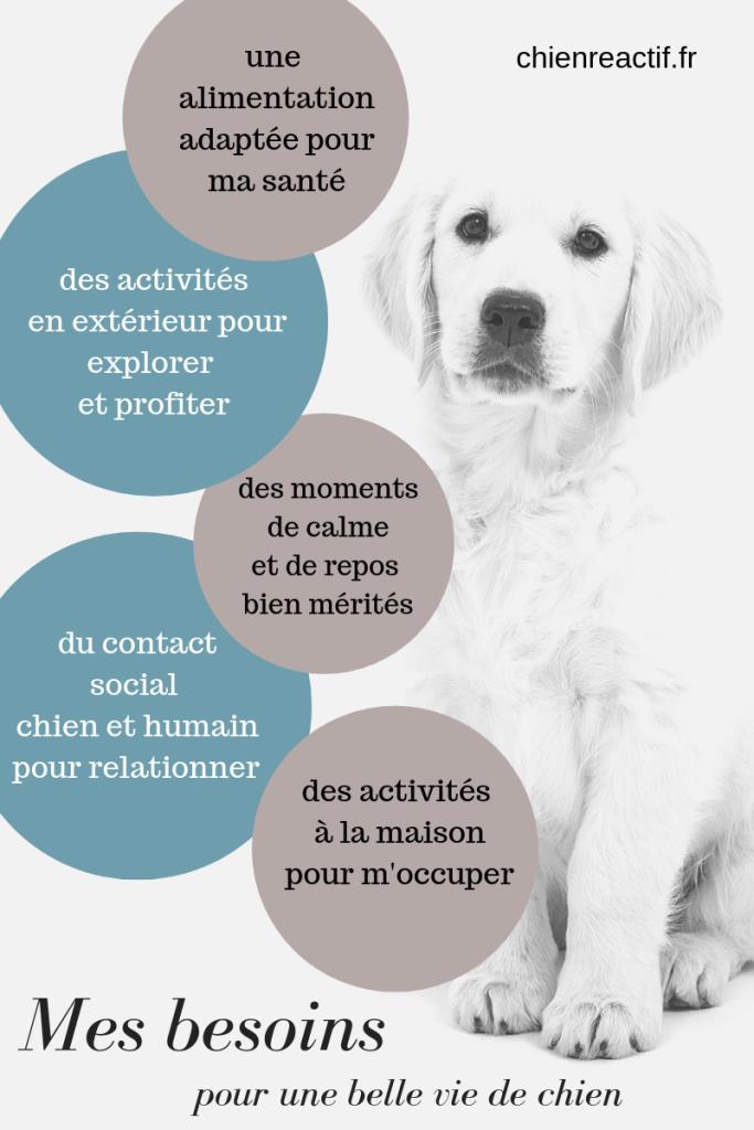 Les besoins fondamentaux du chien de compagnie